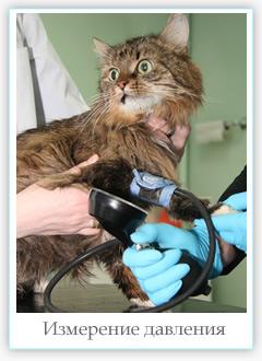 Ветеринарный кардиолог, кардиологическое исследования для собак и кошек в Одинцово