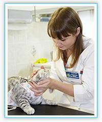 Ветеринарная клиника в Одинцово