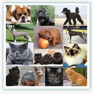 Породы собак и кошек предрасположенные к заболеваниям сердца
