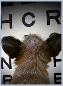 Ветеринарный офтальмолог в Одинцово